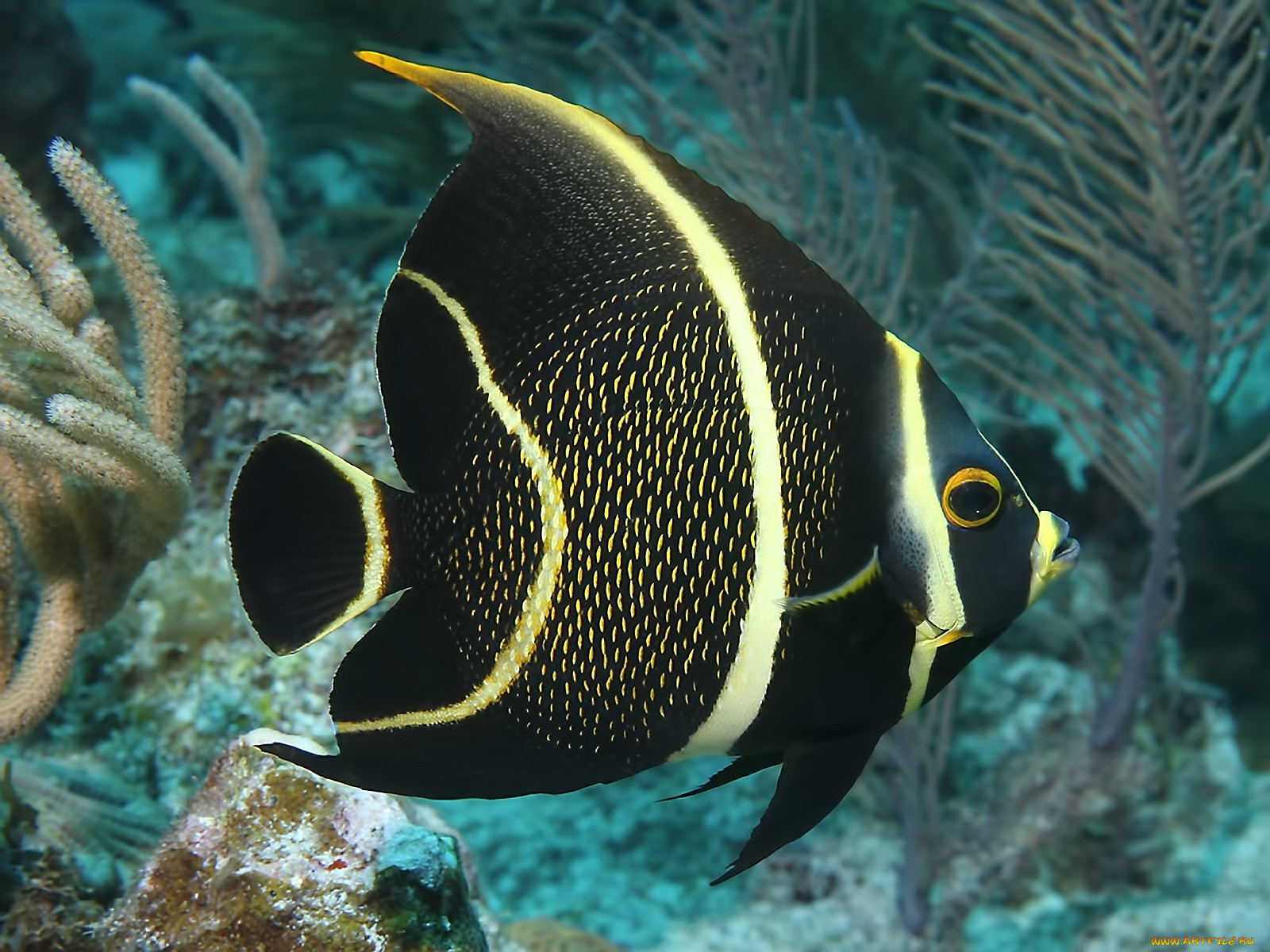 картинки экзотических рыб с названиями центр офтальмологии